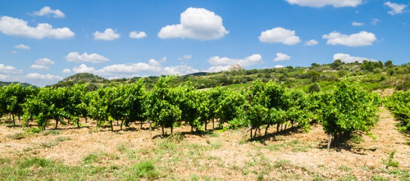 Les vins de la Vallée de la Loire